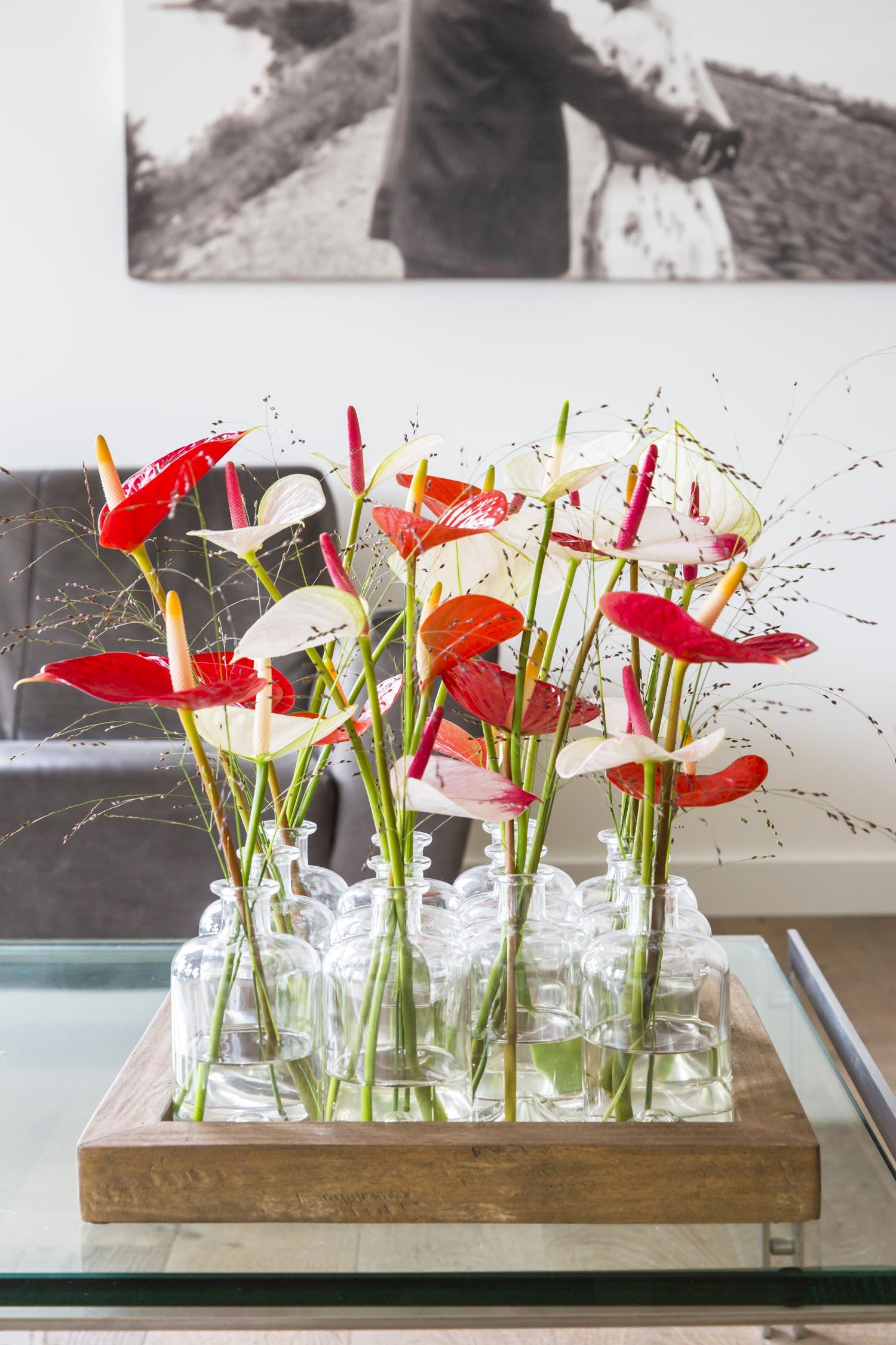 Berühmt 4 Gründe, warum die Anthurie die ultimative Valentinsblume und @ZR_15