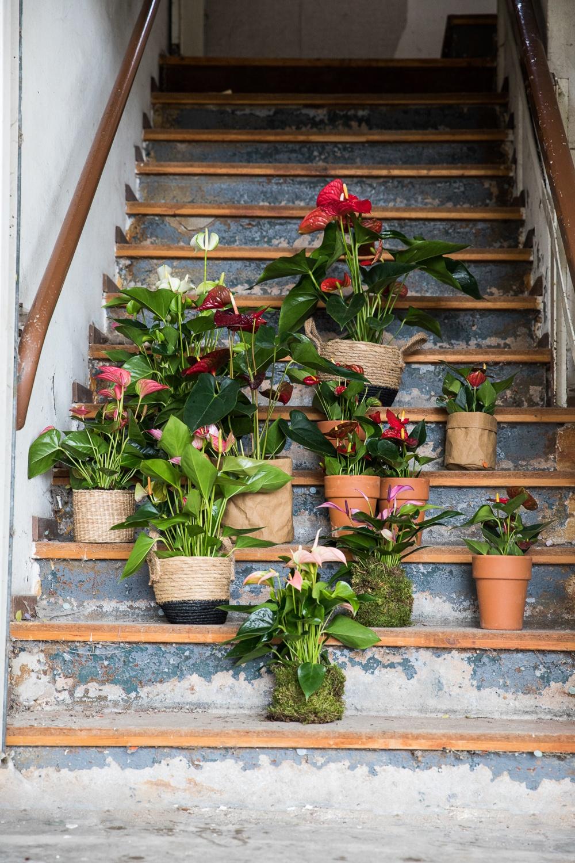 Mit diesen Pflanzen können Sie sich den Frühling sofort ins Haus holen