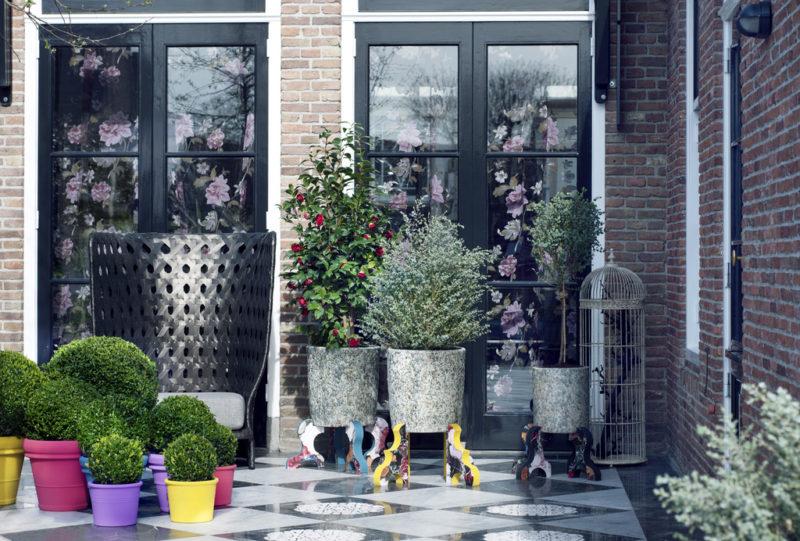 Anthurium Info Alles Uber Anthurium Topfpflanzen Und Schnittblumen