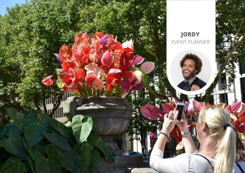 Flamingos auf der Königsallee: Ein Blumengeschenk an Düsseldorf