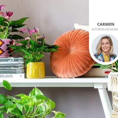 diese pflanzen sorgen f r sauberere und frischere luft im haus. Black Bedroom Furniture Sets. Home Design Ideas