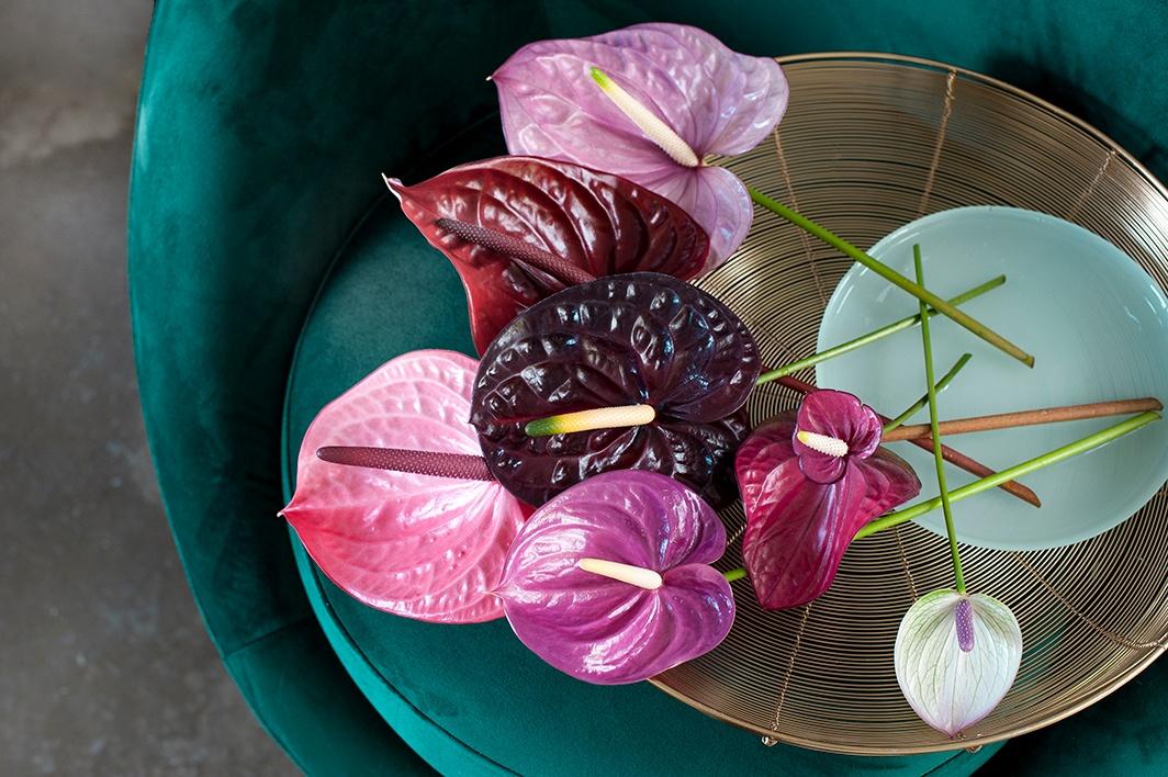 """Mit diesen Kunstwerken aus der Natur verleihen Sie dem Interieur einen farbenfrohen und exotischen """"Look"""""""