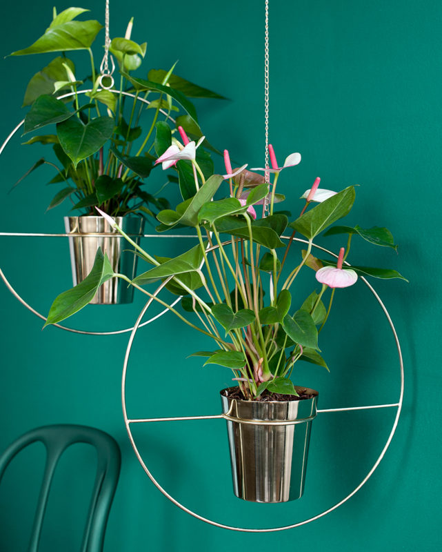 """Verleihen Sie Ihrem Interieur einen farbenfrohen, exotischen """"Look"""" mit Pflanzen und lassen Sie den Herbst aufblühen."""