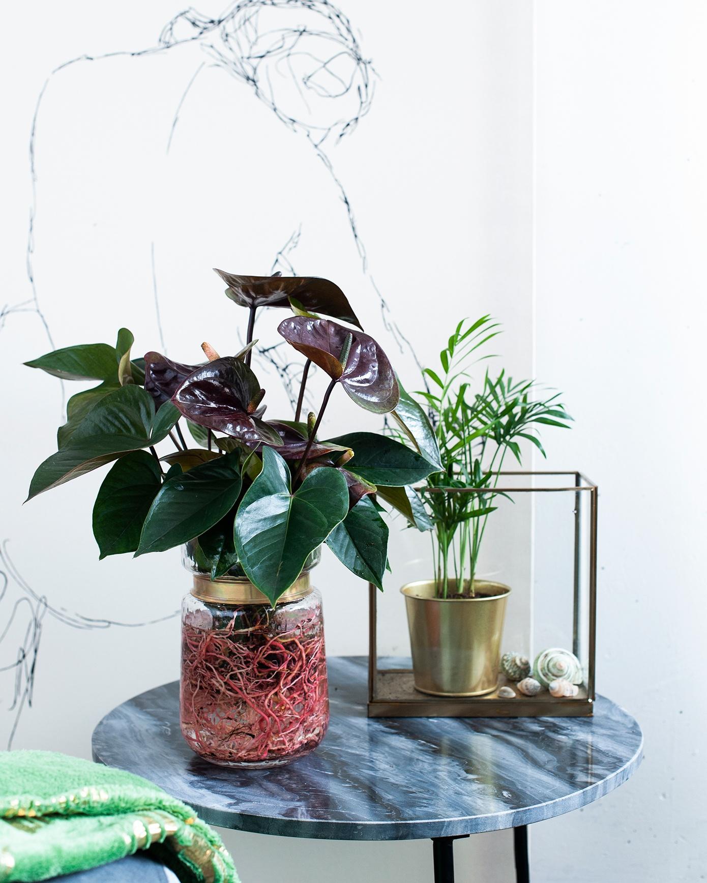 """Verleihen Sie Ihrem Interieur einen farbenfrohen, exotischen """"Look"""" mit Pflanzen"""