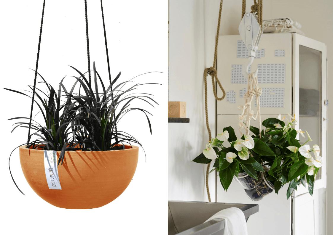 6 besondere Pflanzengefäße für Ihre Topfanthurie