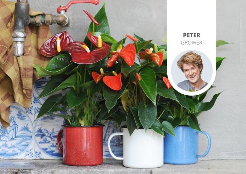 Wie bringe ich meine Pflanzen (wieder) zum Blühen?