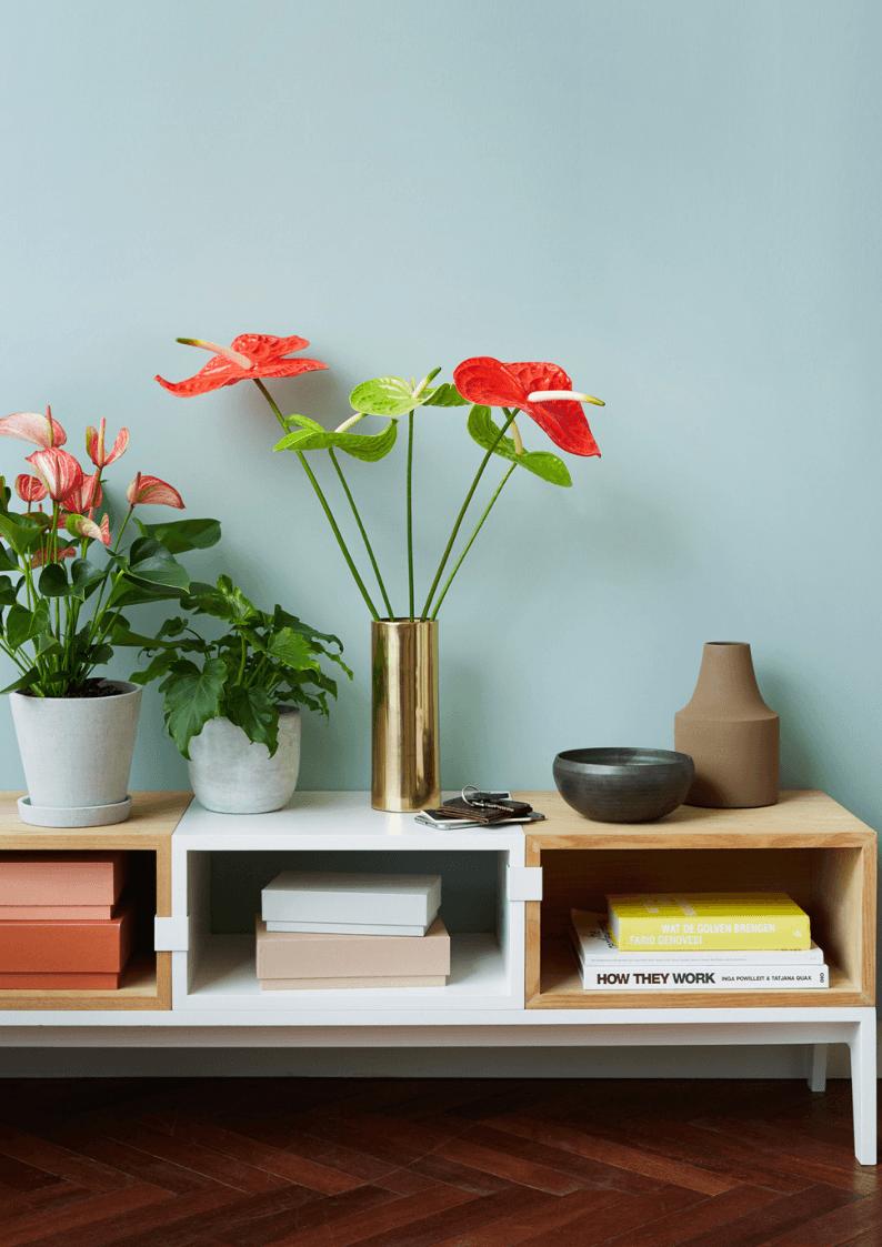 Blumenarrangements mit Schnittanthurien gestalten: 3 Ideen