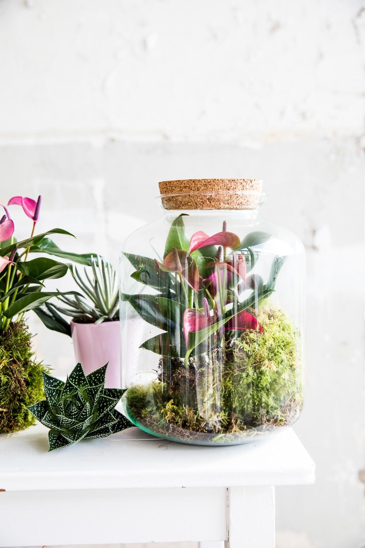 4 originelle Arten, eine Pflanze zu verschenken