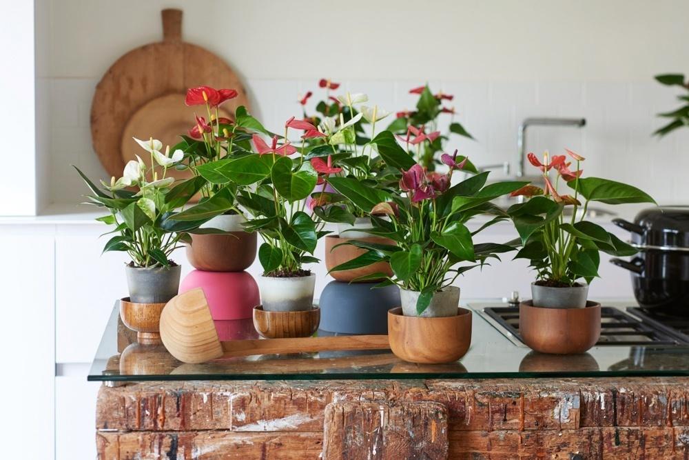So sorgen Zimmerpflanzen für Reisegefühle