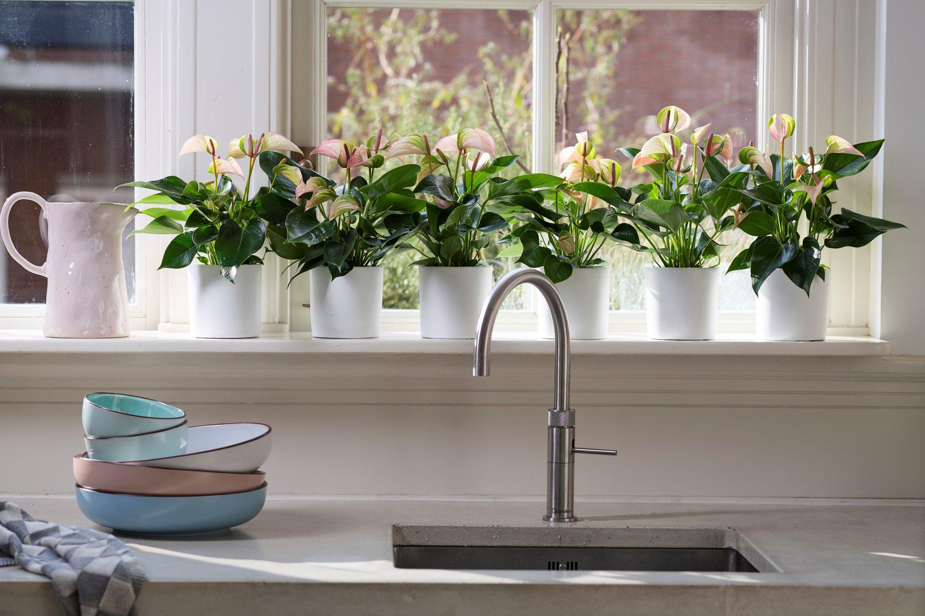 Eine neue Zimmerpflanze als Mitbewohnerin? Dann sollten Sie als erstes diese Dinge tun.