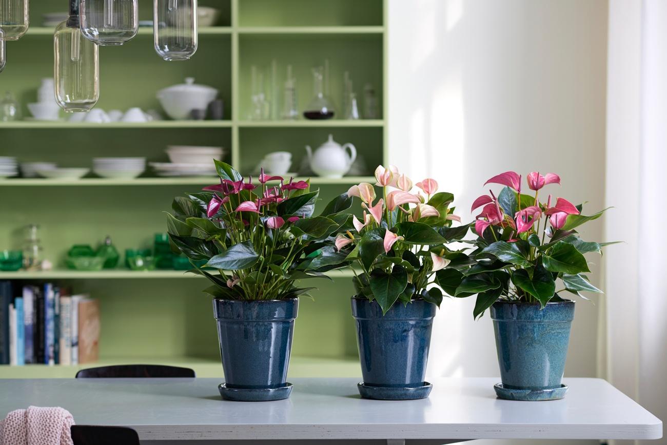 So pflegen Sie Ihre Zimmerpflanze im Herbst