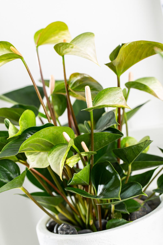Warum es gut ist, Staub auf Blättern zu entfernen