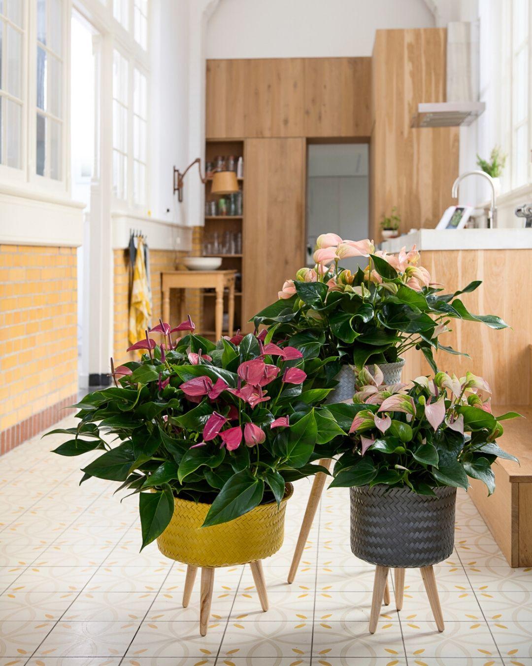 Die positive Wirkung von Pflanzen