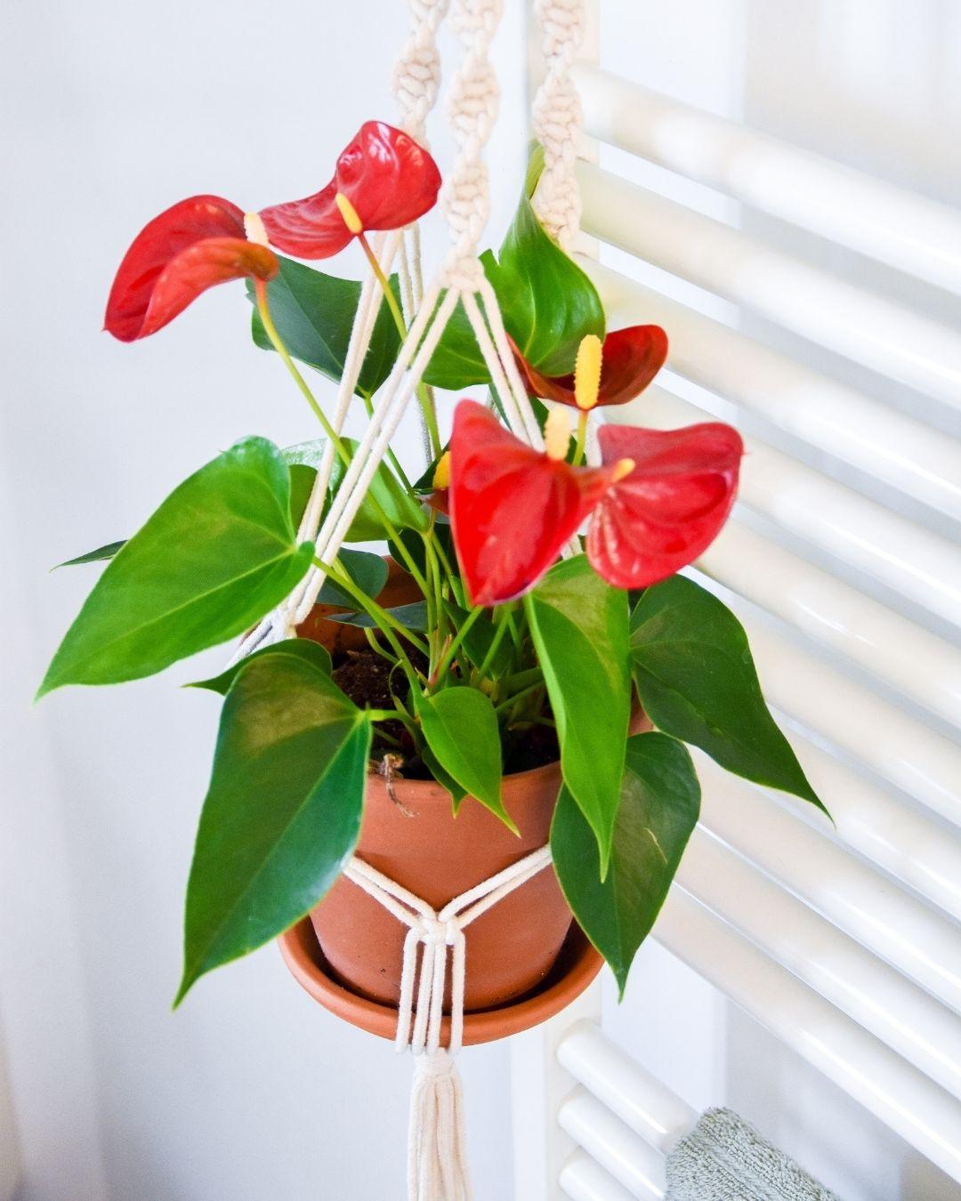 Die schönsten Pflanzenampeln