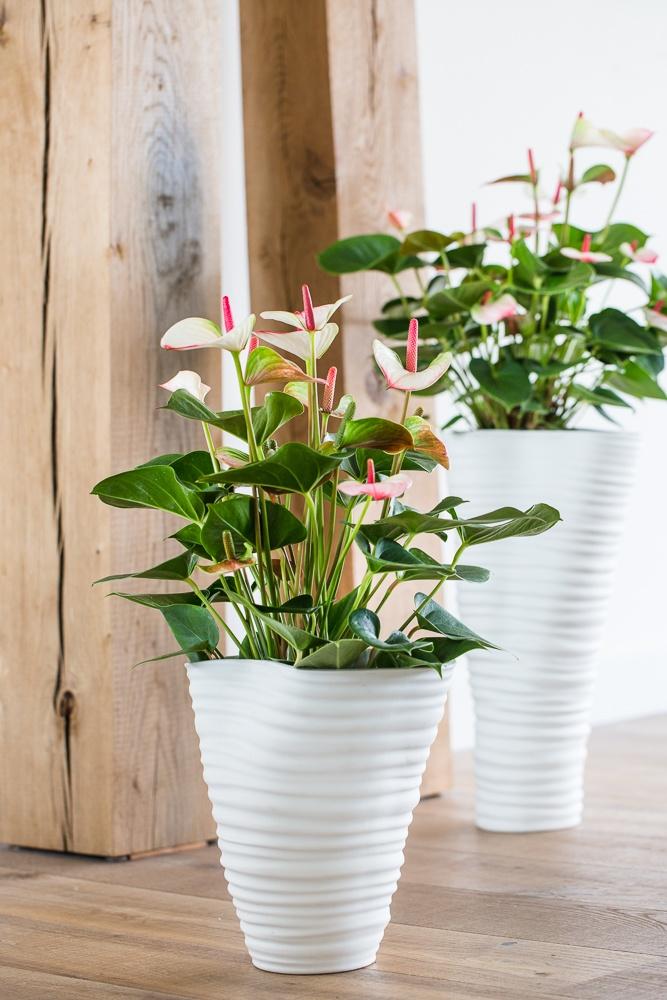 3 Tipps für ein Update Ihres Interieurs