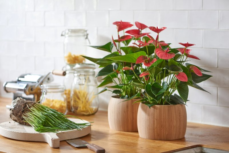 how to care for cut flowers