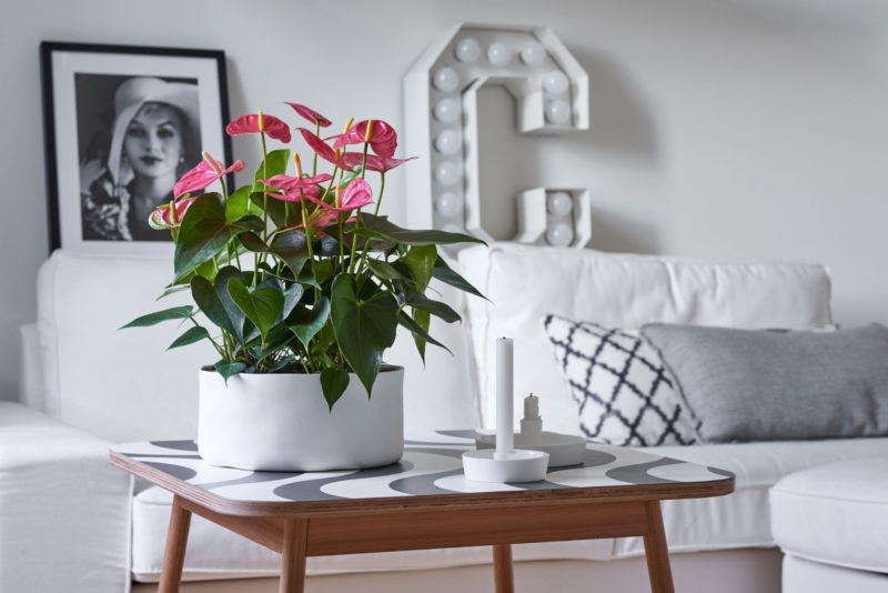 These 5 plants purify and freshen the air indoors