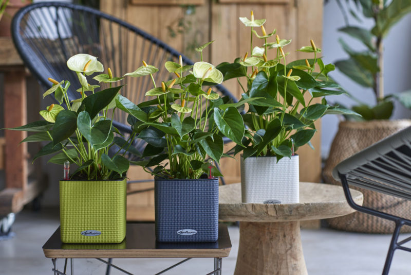 4 gifts that will make anyone who loves plants happy