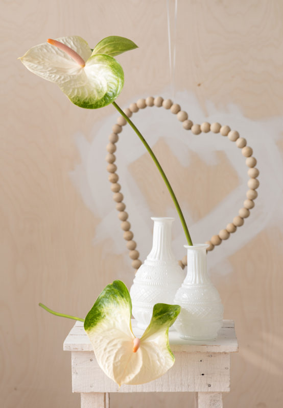4 reasons why the anthurium makes the ultimate flower or plant for Valentine's Day