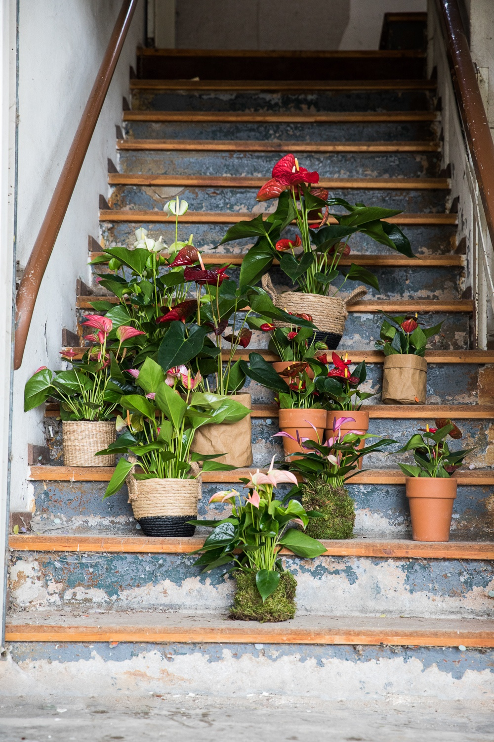 Bring spring into the house with Anthurium houseplants