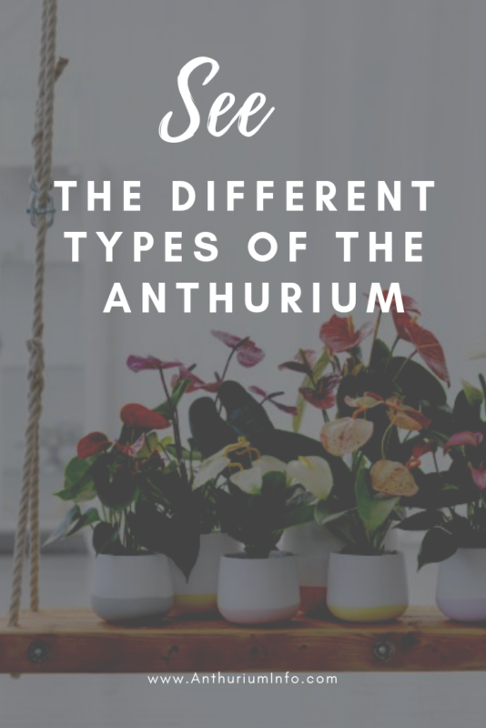 The different types of the Anthurium