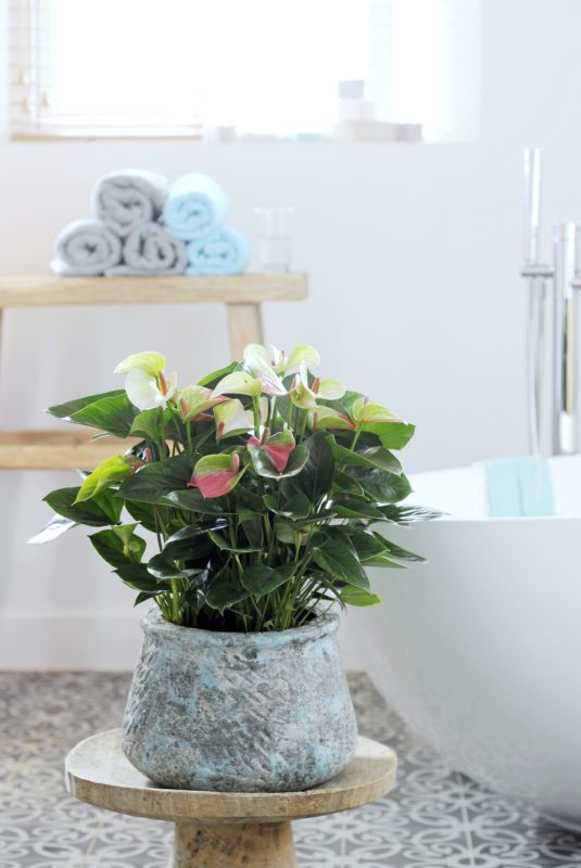 How to create an urban jungle in your bathroom