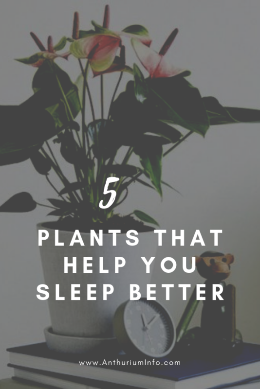 5 plants for a better night's sleep
