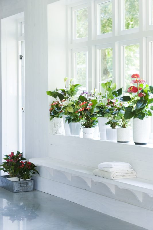 4 tips to give your plants a long happy life