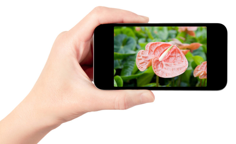plant apps to help you identify and care for a plant