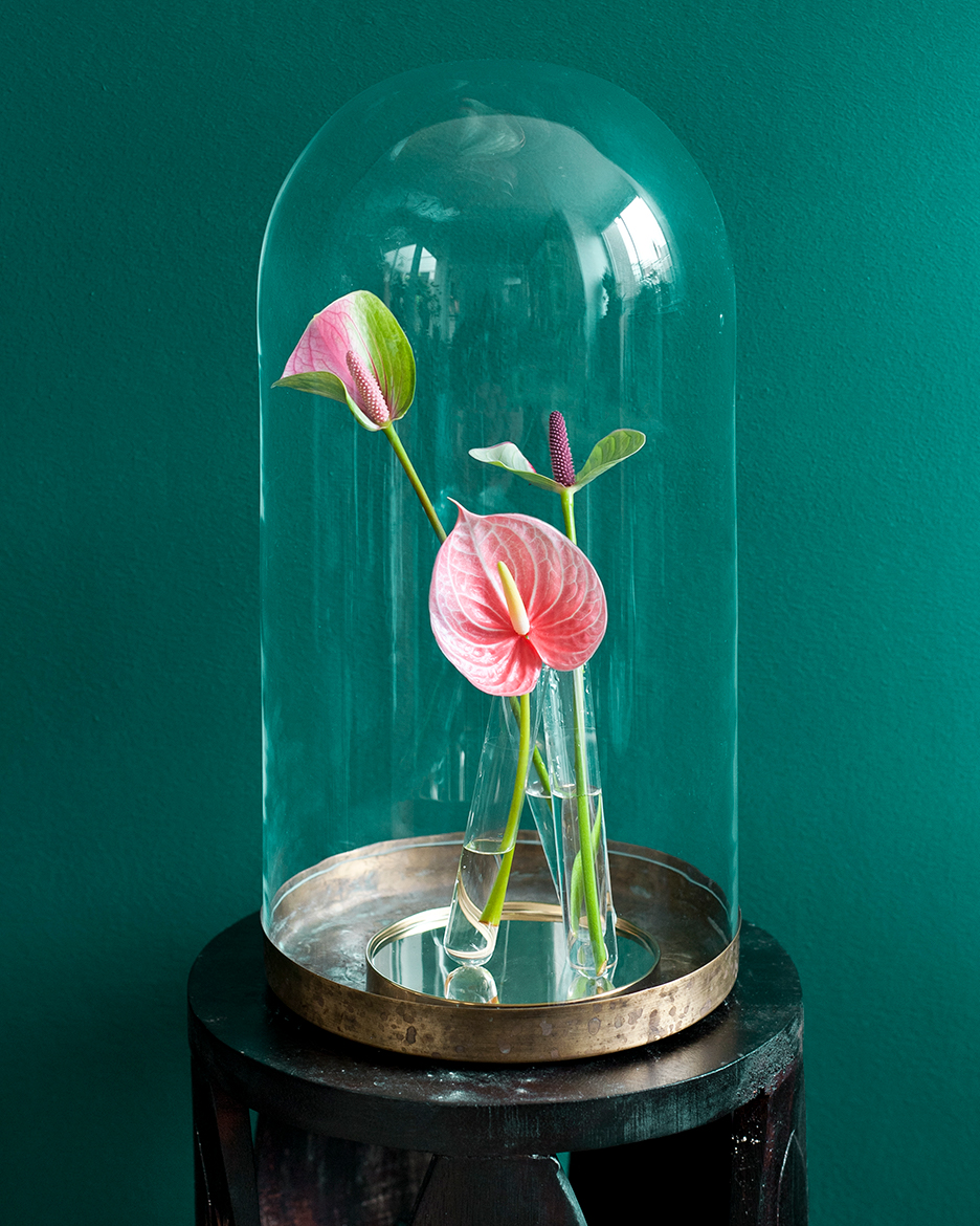 These little works of art from the world of nature will give any room a colourful exotic look