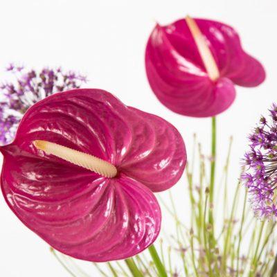 Ton-sur-ton Anthurium bouquet with Allium