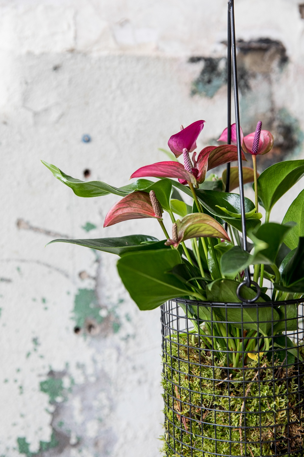 4 original ways to make a plant a special gift
