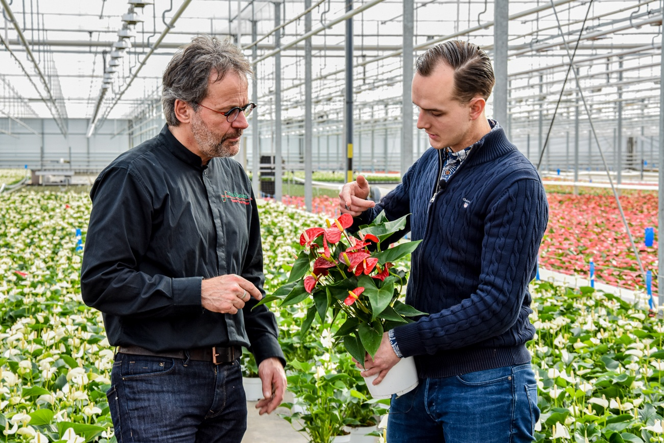floral designer Paul Deckers chooses the Anthurium this year as the main flower for the decoration of St. Peter's Square.