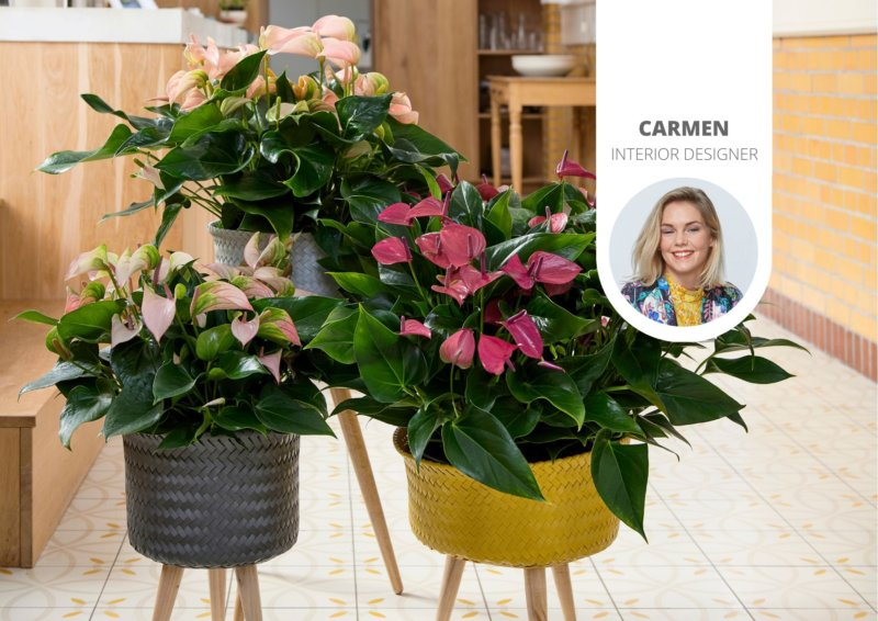 With these plants you bring spring into the house
