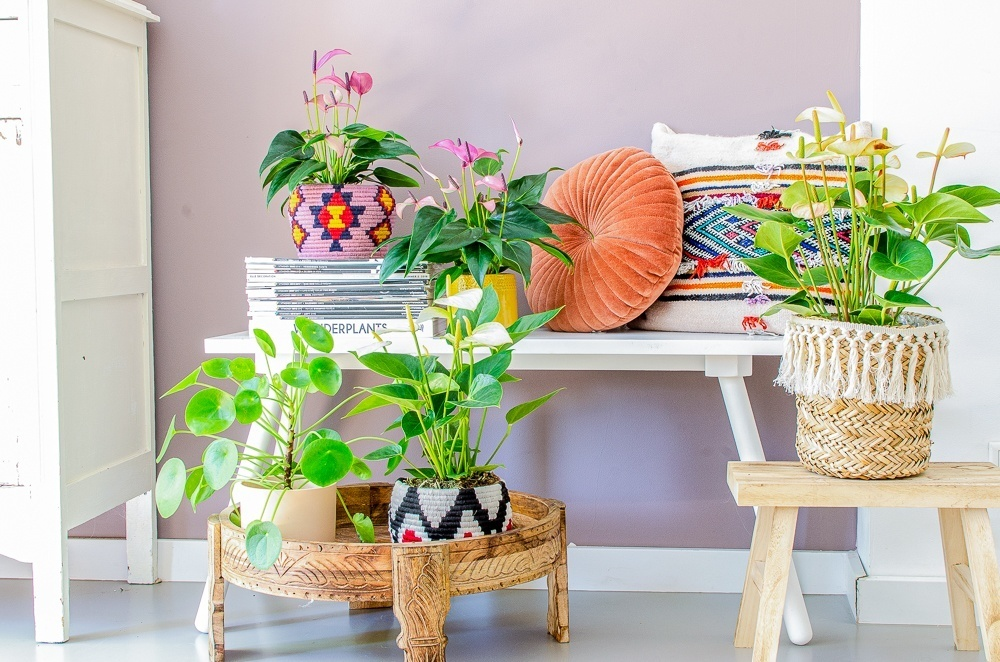 How to create a vacation vibe at home with plants