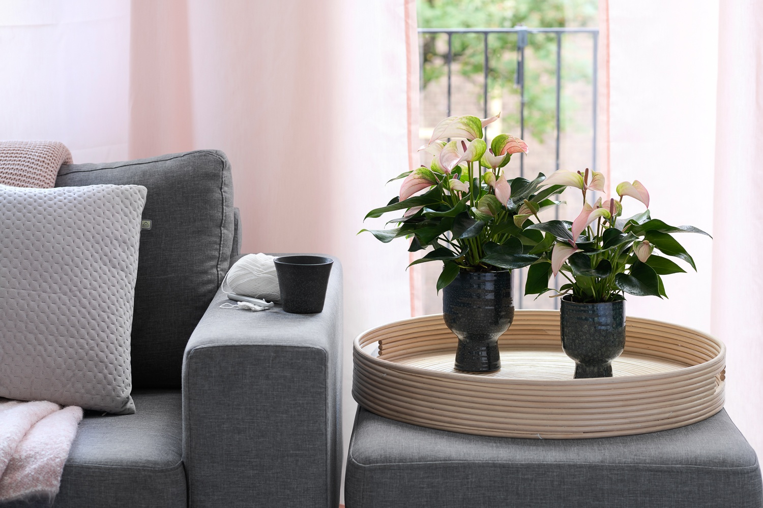 How to move houseplants to your new home