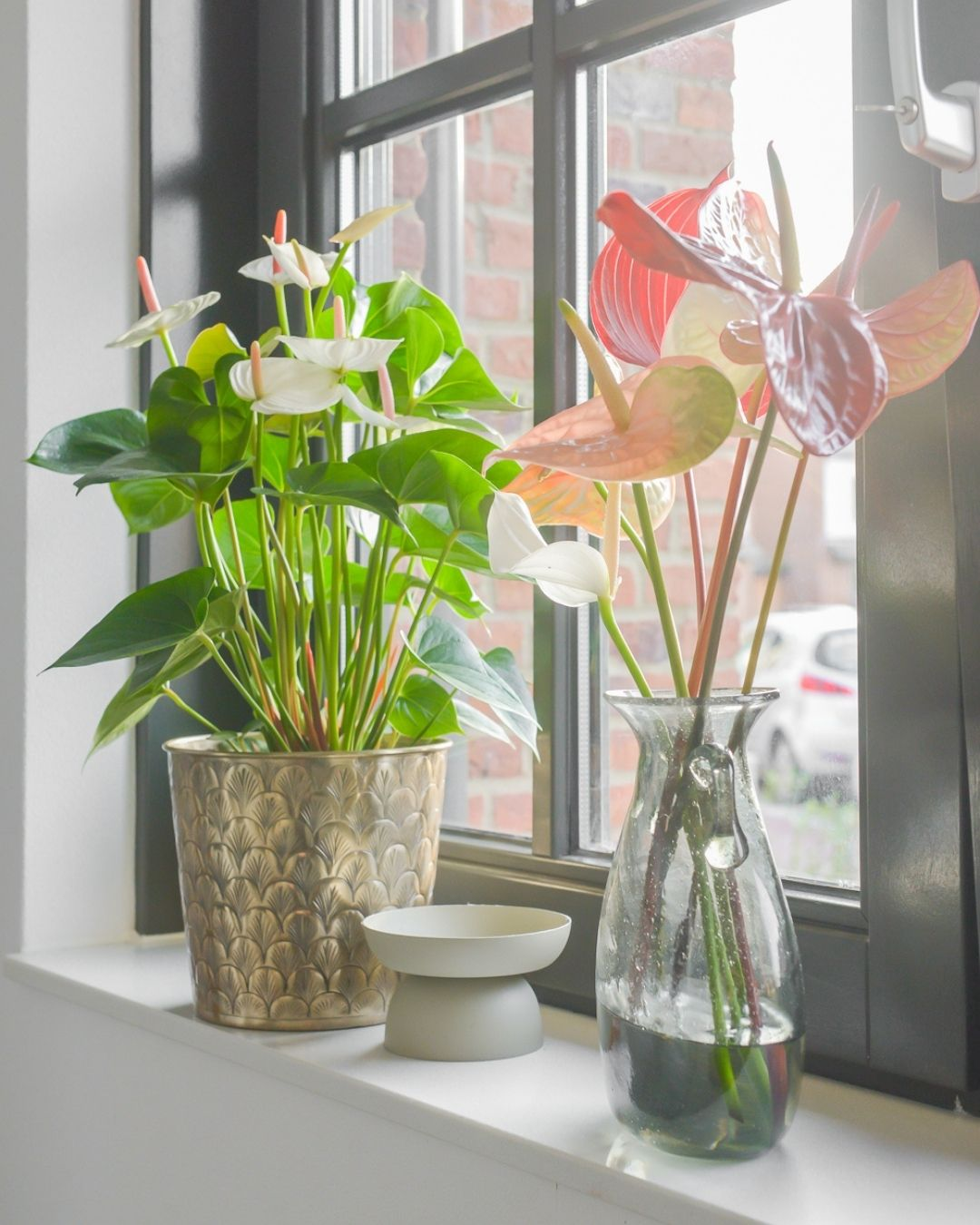 This is how Binti Home Blog styles anthuriums in her interior