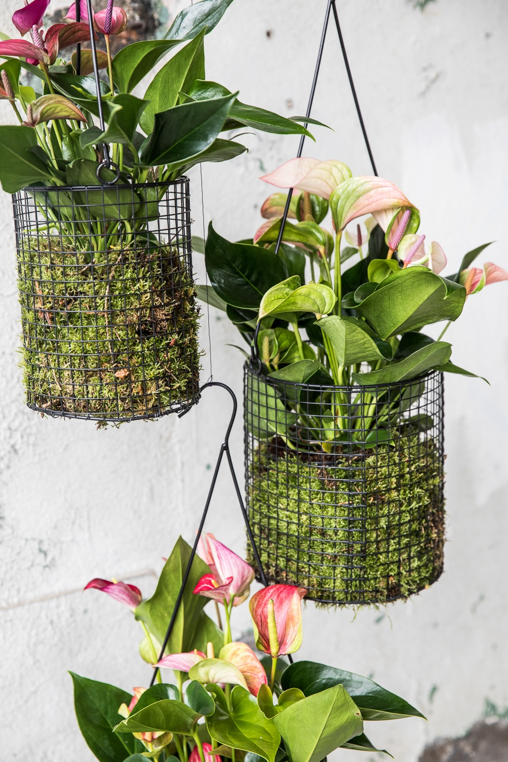 The most beautiful plant hangers to display your plants