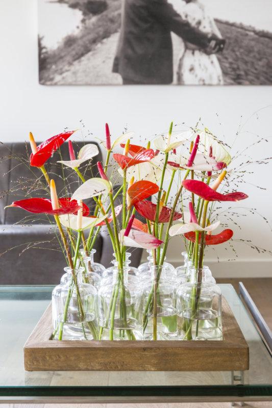 Différentes espèces d'anthuriums: la fleur de cire et le flamant rose
