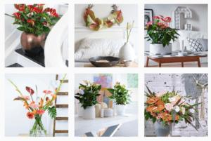6 Instagram-accounts voor bloemenliefhebbers