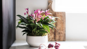 Est-il nécessaire d'utiliser un terreau spécial anthurium?