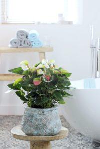 Comment créer un style Urban Jungle dans la salle de bain