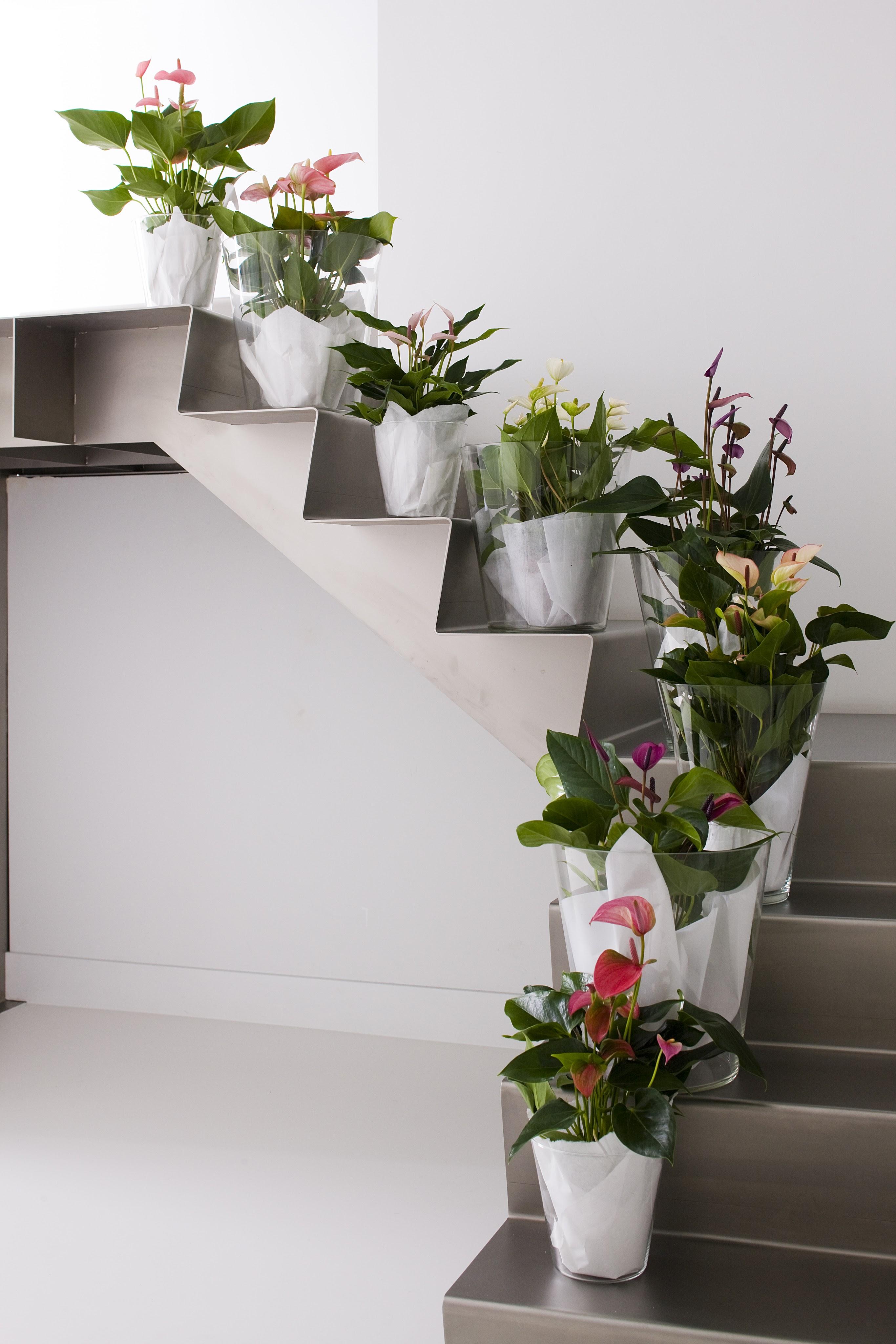 Avec ces plantes, vous ramènerez le printemps dans la maison
