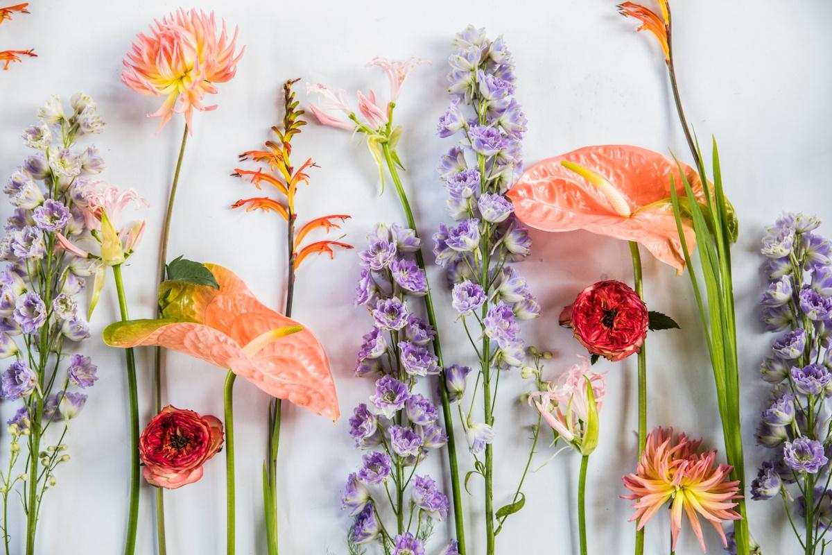 Réussir ses photos de fleurs