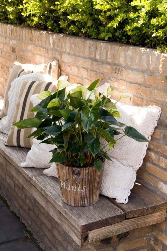 Comment tailler une plante d'anthurium?