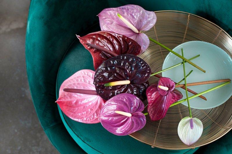 Avec ces petites œuvres d'art de la nature, vous donnez un look exotique et coloré à votre intérieur