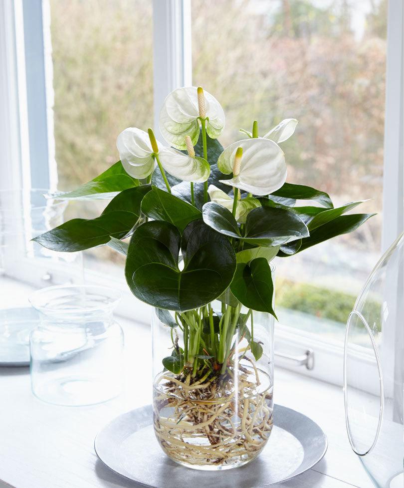 Plante D Intérieur A Faire Pousser quelles plantes poussent dans l'eau ?