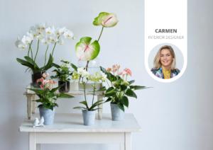 Les plantes sont-elles conseillées dans une chambre à coucher ?