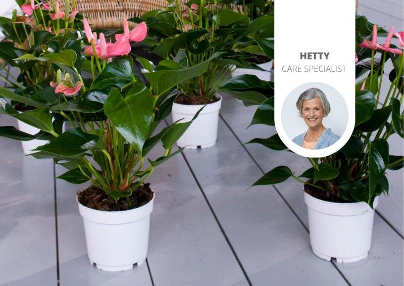 Pourquoi le pot intérieur en plastique d'une plante d'appartement est si important