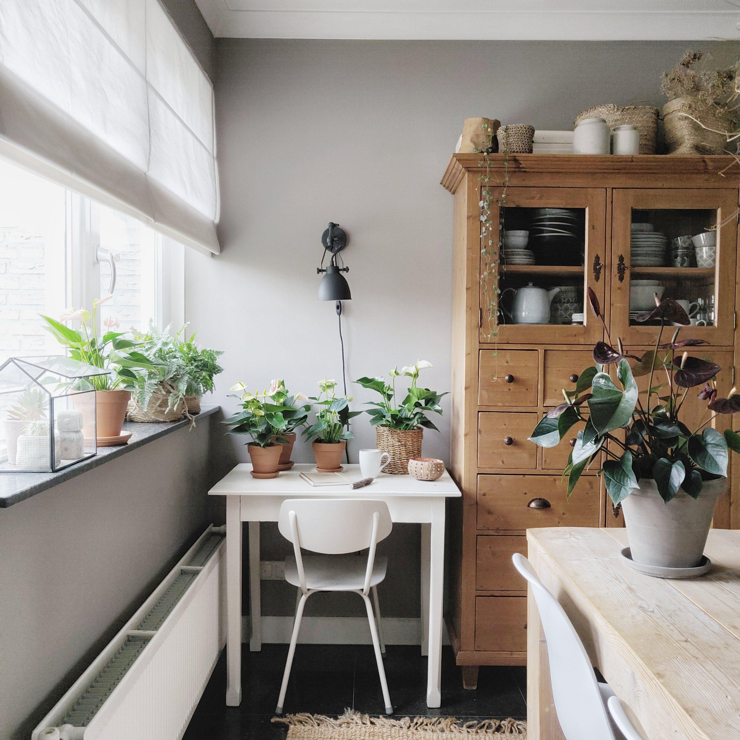 Inspiration anthurium : pour 3 intérieurs différents